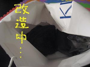 20117456_4