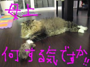 Blog049_2